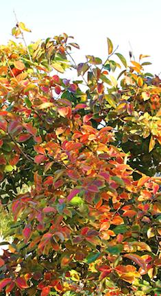Color Nov 2013 png