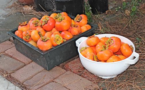 Winter Harvest 2013 png